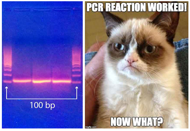 Figure 6: Every good cloning starts with a successful PCR. The tricky thing is where to go from there.